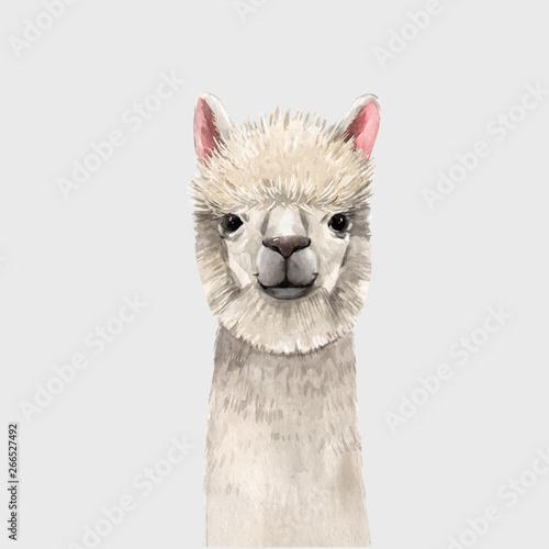 Watercolor lama vector portrait