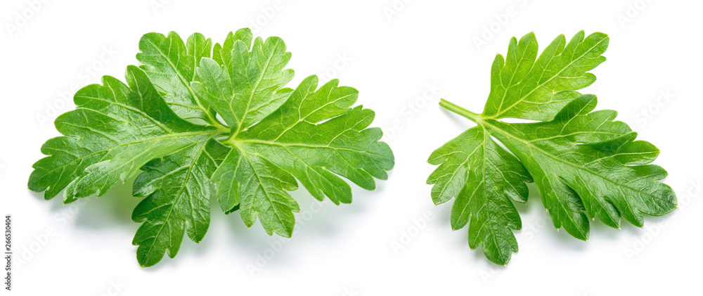 Fototapety, obrazy: Parsley. Parsley isolated. Top view. Full depth of field.