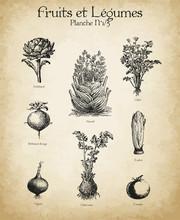 Gravures Anciennes Fruits & Légumes N°1/5