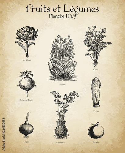 Plakaty botaniczne gravures-anciennes-fruits-legumes-n-1-5