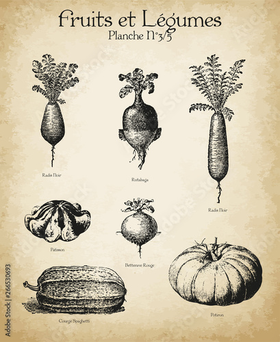 Plakaty botaniczne gravures-anciennes-fruits-legumes-n-3-5