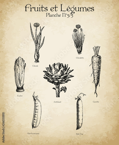 Plakaty botaniczne gravures-anciennes-fruits-legumes-n-5-5