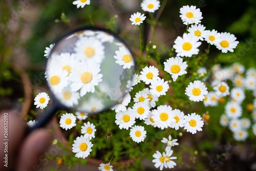 白い花を虫眼鏡で見る