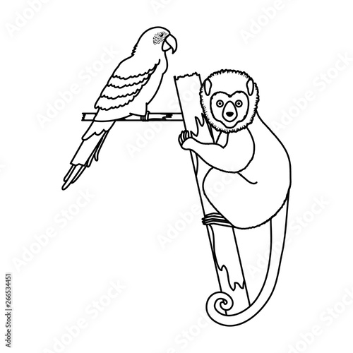 Photo tropical capuchin monkey and parrot