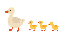 Mother Duck And Ducklings. Cute Baby Ducks Walking In Row. Cartoon Vector Illustration. Duck Mother Animal And Family Duckling.