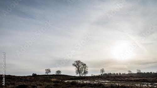 Fototapety, obrazy: Autumn tree, dutch Veluwe, landscape, nature, the Netherlands