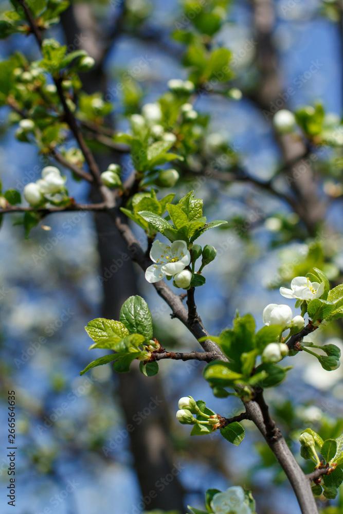Fototapety, obrazy: bloom