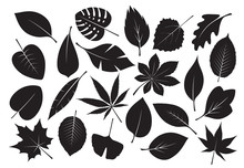 Collection Of Black Leaves. Vector Illustration.