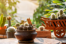 The Group Of Green Cactus With Sharp Thorn Growing In The Small Mugs And Small Cart With The Sun Flare And Shadow In The Afternoon.