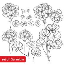 Set With Outline Geranium Or C...