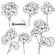 Set With Outline Geranium Or Cranesbills Flower Bunch And Ornate Leaf In Black Isolated On White Background.