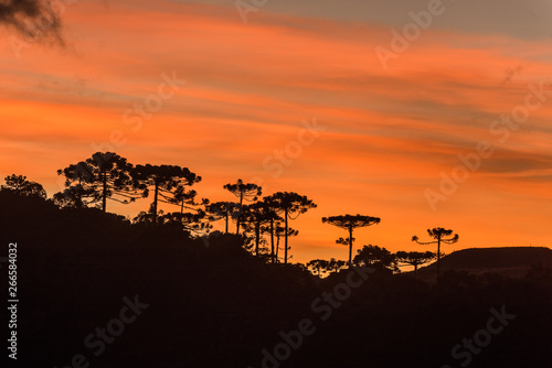 Sunrise in the Sierra Catarinense, colorful sky with silhouette of araucarias forest Canvas Print
