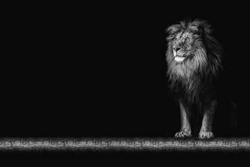 Portrait of a beautiful lion and copy space. Lion in dark