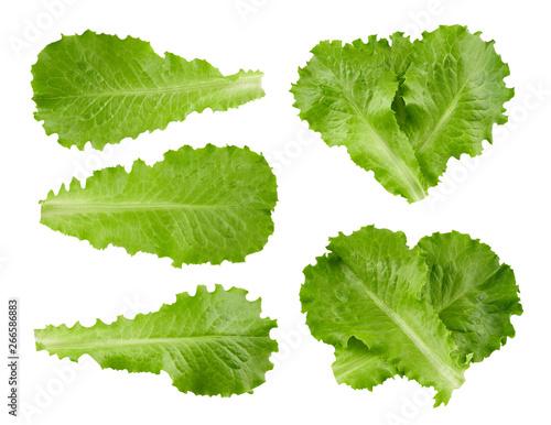 Fototapeta lettuce leaves Clipping Path obraz