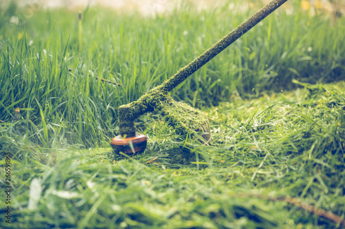 Fototapety, obrazy: Cutting grass with a professional grass trimmer