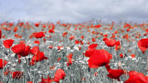 Folia na okno łazienkowe Czerwone kwiaty na C&B polu