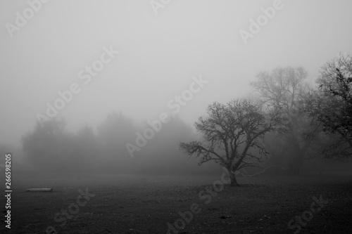 Pinturas sobre lienzo  Paisaje niebla terror