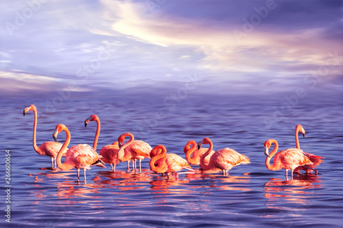 Spoed Foto op Canvas Flamingo A flock of beautiful pink flamingos against a purple sunset. Artistic marine tropical image.