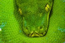 Python Art Photo