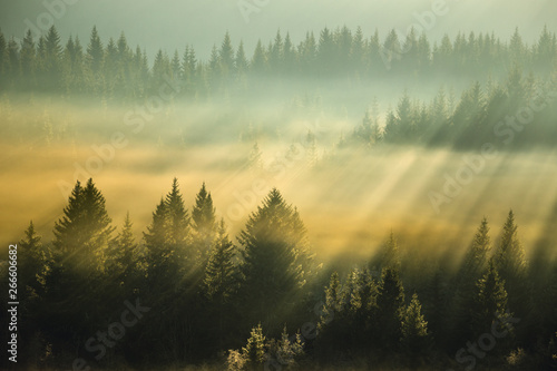 Foto op Canvas Beige Amazing light rays above the forest.