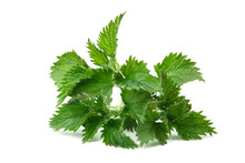 Nettle Isolated On White Backg...