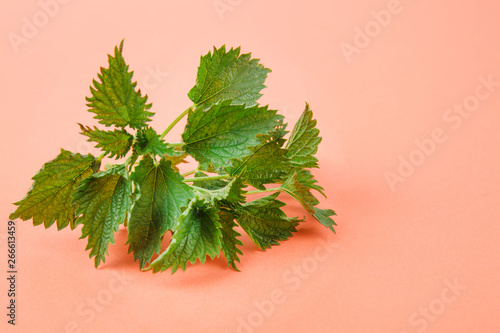 Nettle isolated on white background Canvas Print