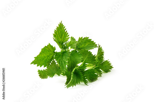 Photo  Nettle isolated on white background