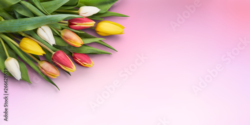 Fototapety, obrazy: A bunch of tulips isolated against a pink background.