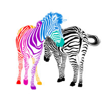 Zebra Couple.  Wild Animal Tex...