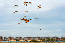 Parrots Flying In The Sky.