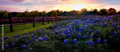 Fond de hotte en verre imprimé Texas Texas Bluebonnets