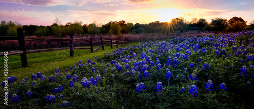 Papiers peints Texas Texas Bluebonnets