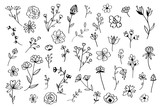 Fototapeta Kwiaty - Hand drawn flower set