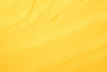 Beautiful Vibrant Yellow Chicken Feather Texture Background