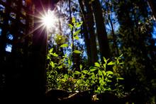 Sun Shining Brightly With Flar...