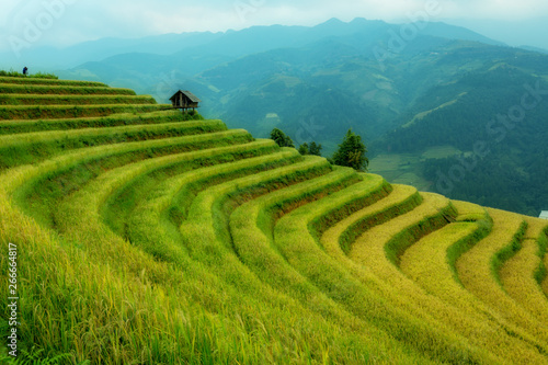 Vietnam Landscape beautiful terrace rice field at Mu Cang Chai