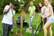 Grüne Aktivisten beim Baum anpflanzen