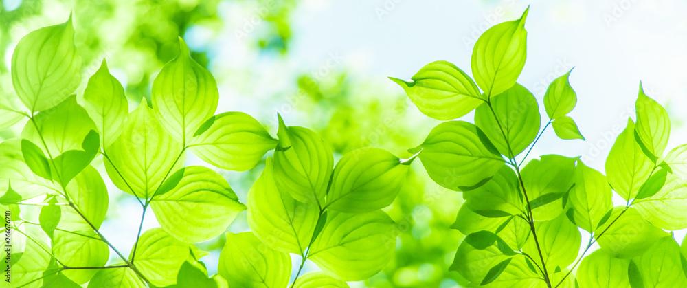 Fototapeta 新緑イメージ