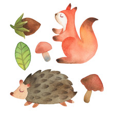 Sleepy Cute Little Squirrel And Hedgehog With Leaf, Hazelnut And Mushroom Isolated On White Background