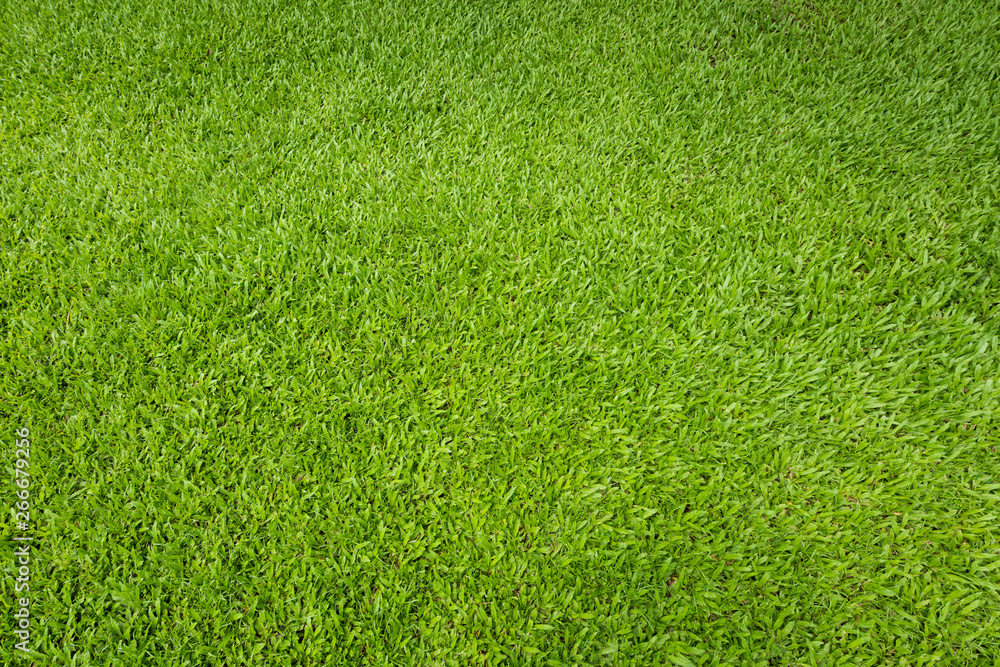 Fototapeta Green grass background and textured, Top view and detail of turf floor at soccer field.