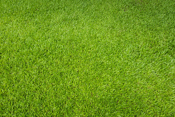 Green grass background and textured, Top view and detail of turf floor at soccer field.