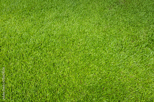 Poster Gras Green grass background and textured, Top view and detail of turf floor at soccer field.