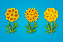 Three Fancy Flowers On A Bright Blue Background. The Composition Of Yellow Sunflowers, Zinnia  And Rudbecky.  Art Object. Minimalism.