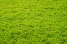 Green Grass Lawn In Garden