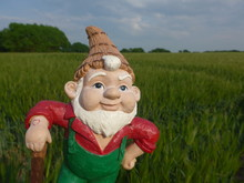 Funny Garden Gnome In Front Of A Green Cornfield (not Copyrighted)