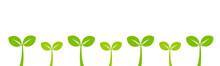 Little Green Plants Seedlings ...
