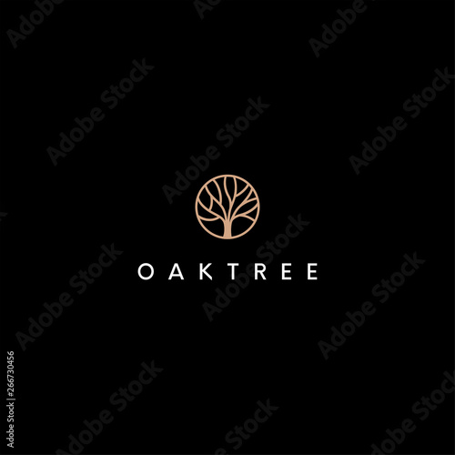 Tablou Canvas oak tree vector logo design