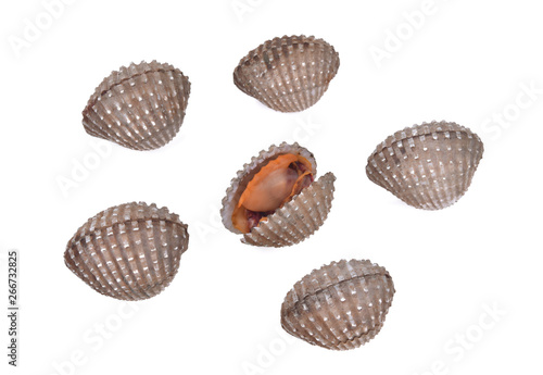 fresh cockles seafood on white background Fototapet