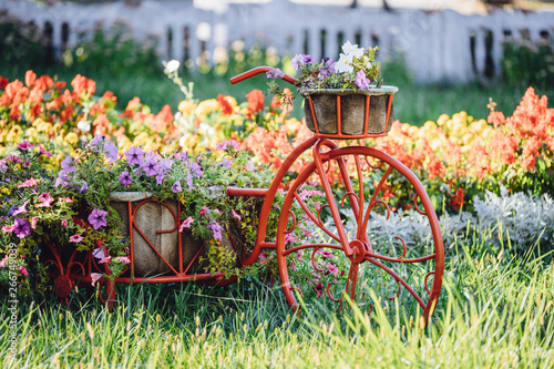 Decorative Retro Vintage Model Bicycle Equipped Basket Flowers Garden. Summer Flower Bed With Petunias.