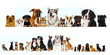 set of pets looks on a white background